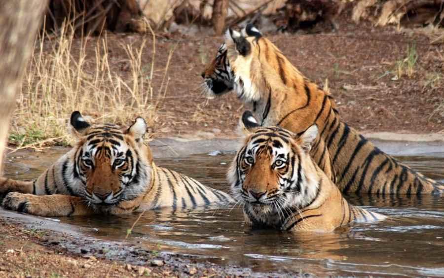 सुंदरबन राष्ट्रीय उद्यान, पश्चिम बंगाल