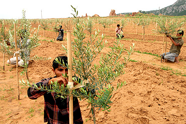 Vegetation of Thar Desert