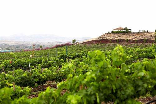 Fratelli Wines