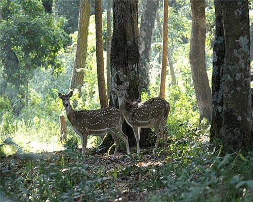 Wildlife Sanctuaries and National Parks in Haryana