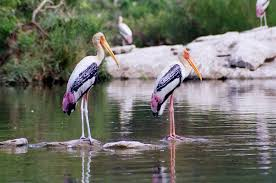 Keoladeo National Park