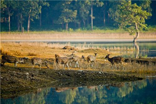Top National Parks of India