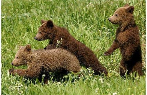 Wildlife Parks in Himachal