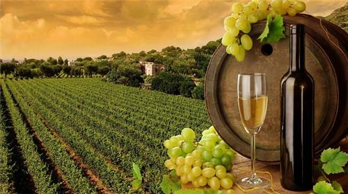 Wineries in India