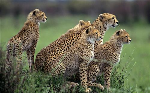 Top Wildlife Sanctuaries in India