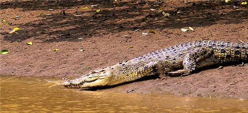 Wildlife Sanctuaries and National Parks in Odisha