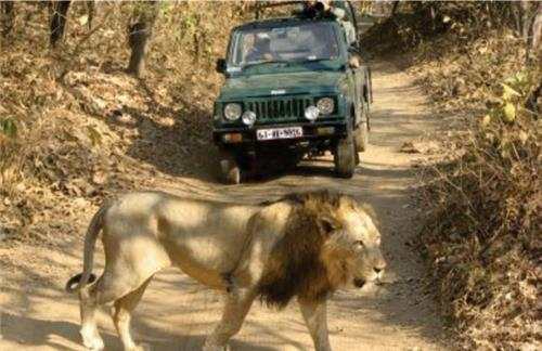 Top Wildlife Safaris in India