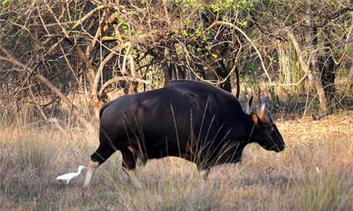 Wildlife Sanctuaries and National Parks in Maharashtra
