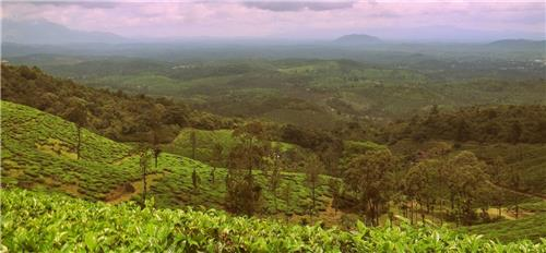 Best Coffee Plantations in Tamil Nadu