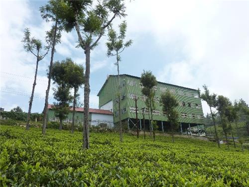 Tea estates in Kerala