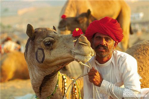 Camel Fair in Jaipur