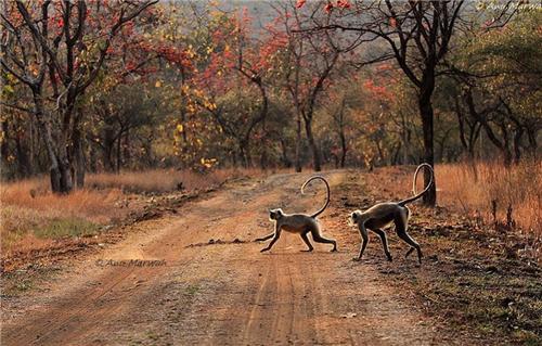 WIldlife sanctuary in Nagpur