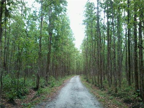 Baikunthapur Forest Jalpaiguri