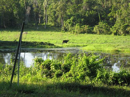 Chapramari Wildlife