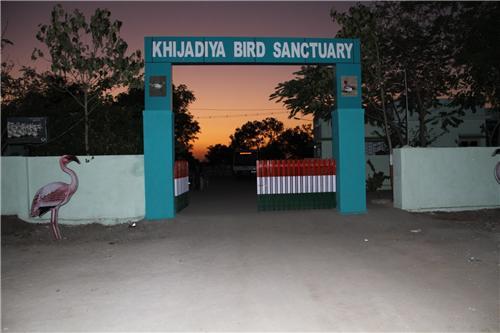 Khijadiya Bird Sanctuary Jamnagar