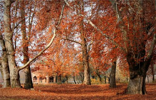 Traveling to Jammu Kashmir in Autumn