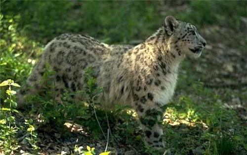 Wildlife Sanctuaries in Jammu and Kashmir