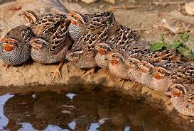 Wildlife sanctuaries present in Jammu Region