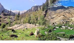 Wildlife in Jammu Region