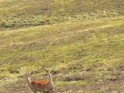 Distinguished Wildlife in National Parks of Jammu Kashmir