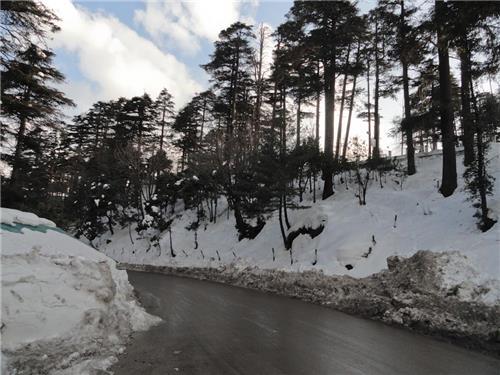 Winter Snow in Batote