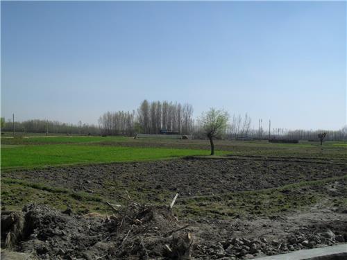 Farmland near Ganderbal Town