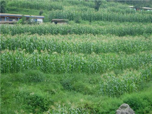 Agricultural activities in Kathua