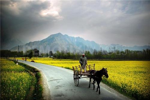 Khrew, Jammu & Kashmir