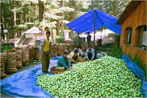 Horticulture Business in Leh
