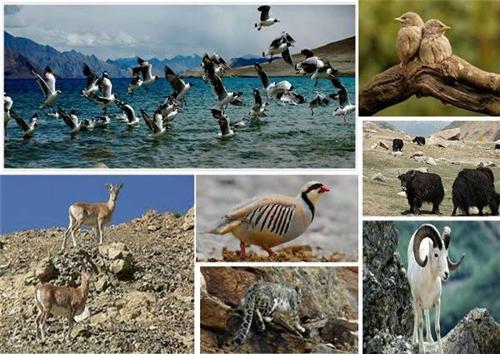 Wildlife in Leh Ladakh