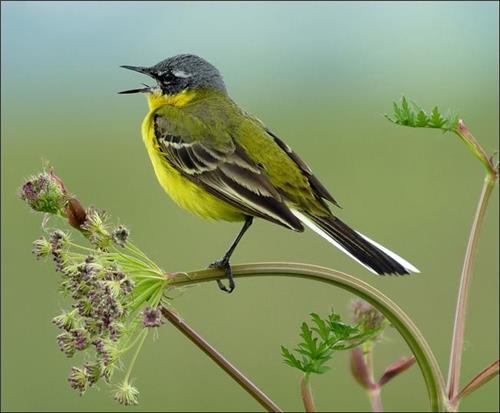 Birds in Rajouri