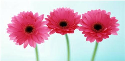 Florists in Kanpur