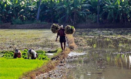 Agriculture in Karnataka