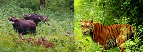 5 Popular Wildlife Sanctuaries in Karnataka