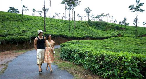 Coffee Trails in Coorg