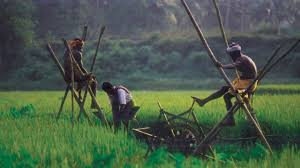 Rice farming in Kerala