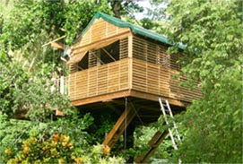The Green Carpet Resorts & Tree House