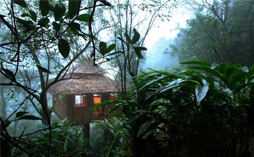 Vanya Tree house, Thekkady