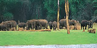 Wildlife Sanctuaries and National Parks in Kerala