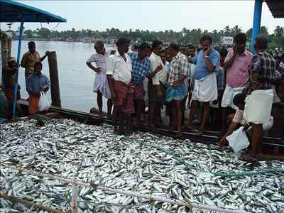 Kerala Famous Fish Markets
