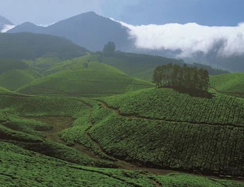 Munnar Hill Station in Kerala