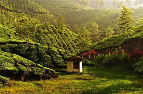 Munnar Tourism Kerala