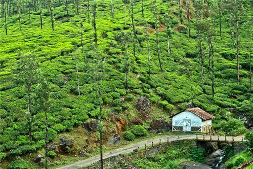 Wayanad Tourist Place Kerala