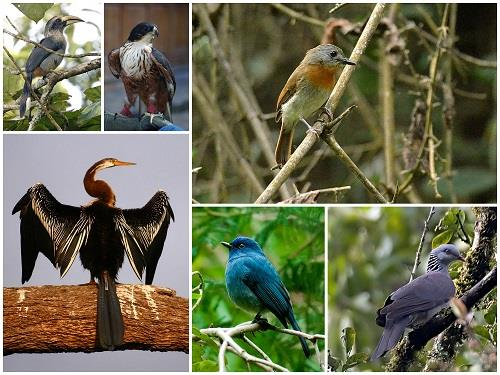 Periyar National Park and Wildlife Sanctuary Birds