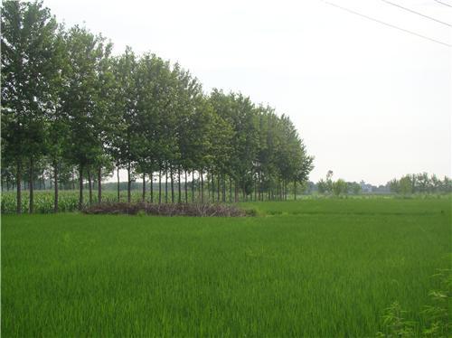 Khanna Geography