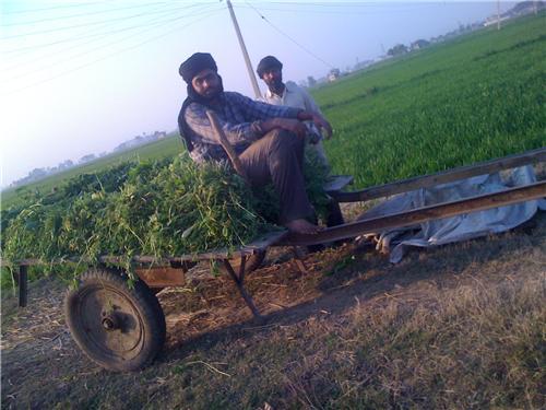 Mehndipur Near Khanna