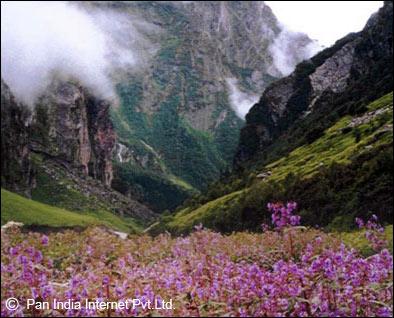 Dzukou valley, Kohima