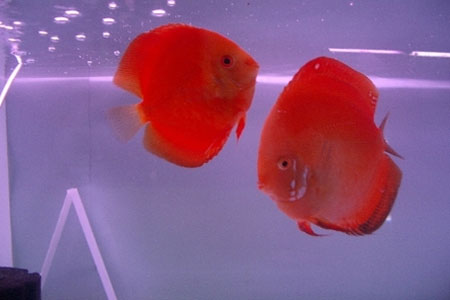 Marine Aquarium in Kavaratti Island