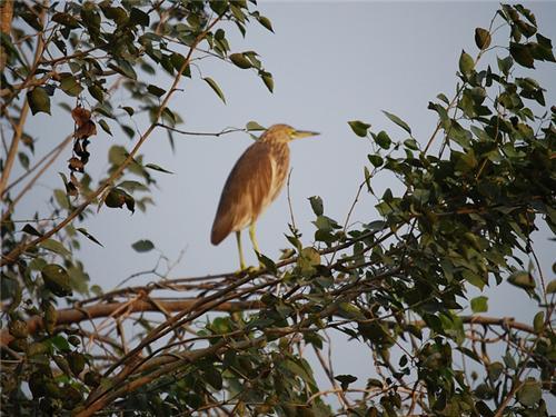 Nawabganj Wildlife Sanctuary Near Lucknow