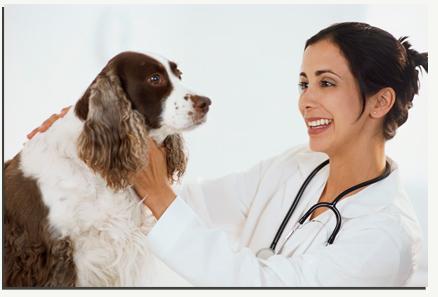 Pet Care in Madurai